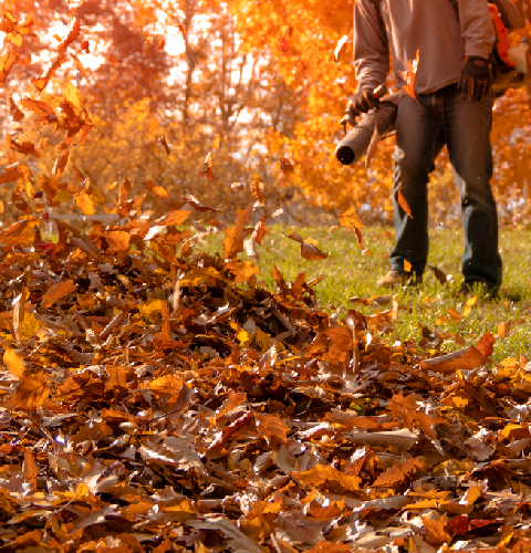 Fall Clean Up Services from Precision Lawn Care