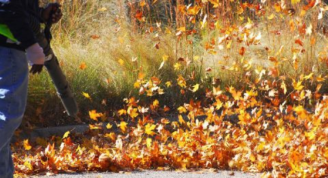 Fall Clean Up, Leaf Removal Services from Precision Lawn Care
